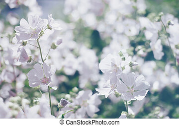 floral, benevelde achtergrond, lente, witte bloemen, defocused, foto
