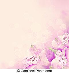 floral, blossom , achtergrond, met, rose bloemen