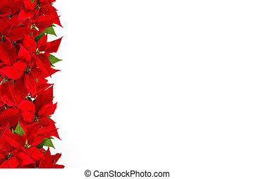 Floral border Christmas red flower white background