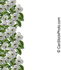 Image and illustration Composition for Card, wedding invitation, stationery, page, background or border of White Dogwood flowers with copy space