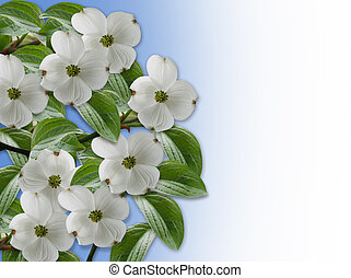 Floral Border Dogwood blossoms - Image and illustration ...