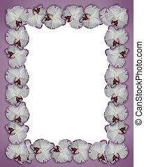 Floral Border Orchids purple