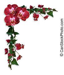 floral, bougainvillea, frontière, orchidées