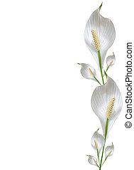 floral, branca, cópia, borda, espaço