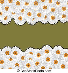 floral, camomile, fronteiras