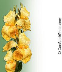 floral, canna, lis, frontière, jaune