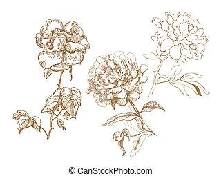floral, collection., hand-drawn, ilustrações