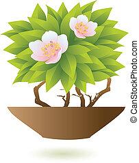 floral, com, pote