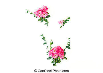 Floral composition of pink roses flowers with green leaves on white background. Flat lay