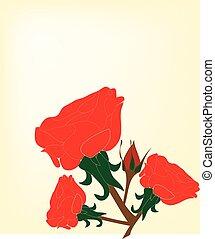 floral, cute, vetorial, fundo, ilustração