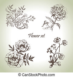 floral, dessiné, set., illustrations, main