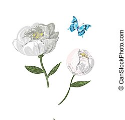 Floral elements of white peony with butterfly isolated on white