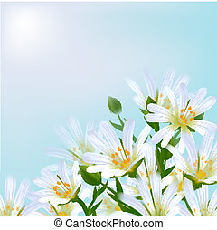 floral, experiência., daisies.