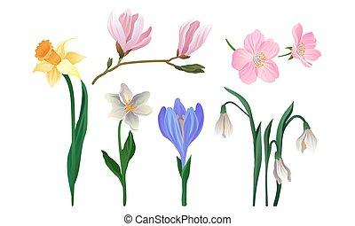 floral, fleurs, réaliste, éléments décoratifs, vecteur, set., collection