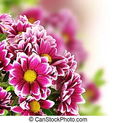 floral, flor, frontera