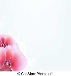 floral, fond, orchidée