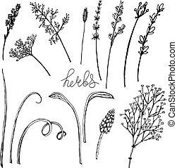 floral, formes, herbs., vecteur, divers, illustration, herbe, types