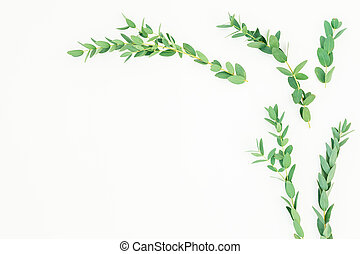 Floral frame of eucalyptus branches on white background. Flat lay, top view