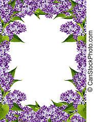 floral frame of spring flowers lilac