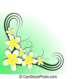 floral, frangipani, decoración, vector