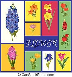 floral, fundo, para, flor, lojas, ou, convite, cartões., flor, bandeira, vetorial, illustration., diferente, coloridos, caricatura, flores, tal, como, rosas, narciso, papoula, tulipa, íris, daylily, gerbera.