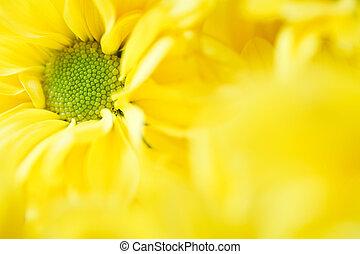floral, gabarit