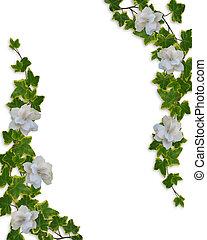 floral, gardénias, frontière, lierre