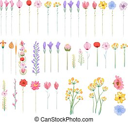 floral, graphique, ensemble, éléments