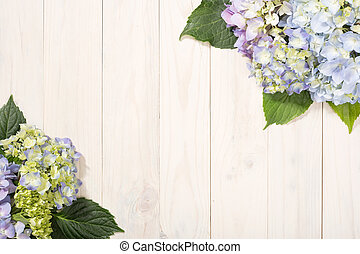 floral, hortensia, fleurs, fond