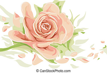 Floral Illustration Featuring a Peach Colored Rose