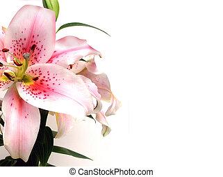 floral, lelie, uitnodiging