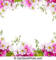 floral, lente, sleutelbloem, achtergrond, bouquetten