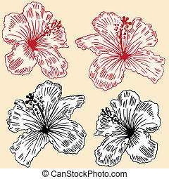 floral, orchidées