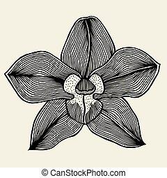 floral, orquídea, vindima