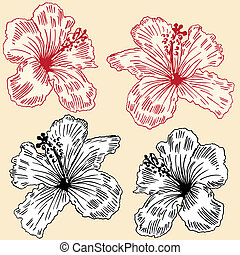 floral, orquídeas