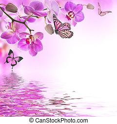 floral, orquídeas, plano de fondo, mariposa, tropical