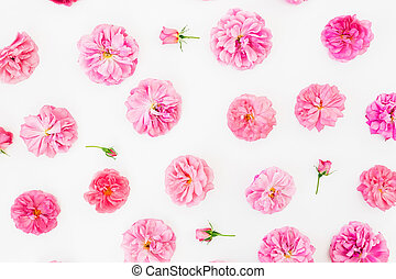 Floral pattern made of pink roses flowers, petals on white background. Flat lay, Top view. Valentines day