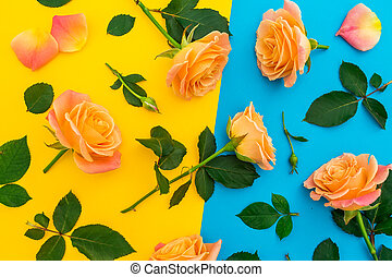 Floral pattern of orange roses with leaves on yellow and blue background. Flat lay, top view.