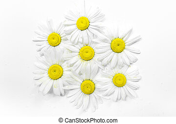 floral pattern with chamomile flower on white background flat lay, top view