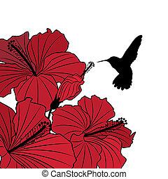 floral, plano de fondo, con, hibisco, y, colibrí