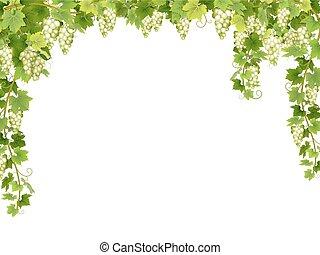 floral, raisin blanc, cadre