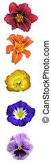 floral, regenboog, bar