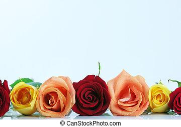 floral, roos, randjes