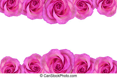 Floral rose border - Border of pink rose isolated on white...