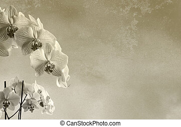 Floral rough background texture with orchids with place for...