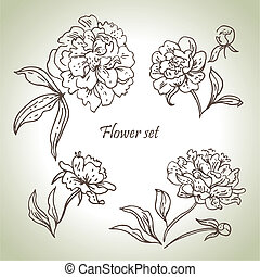 Floral set. Hand drawn illustrations of peonies