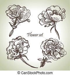 floral, set., hand, getrokken, illustraties