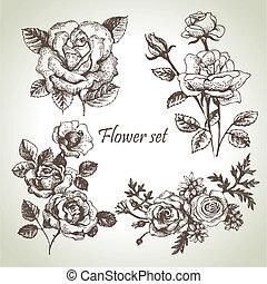 floral, set., mão, rosas, ilustrações, desenhado