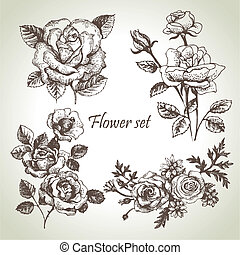 floral, set., main, roses, illustrations, dessiné