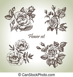 floral, set., main, roses, illustrations, dessiné